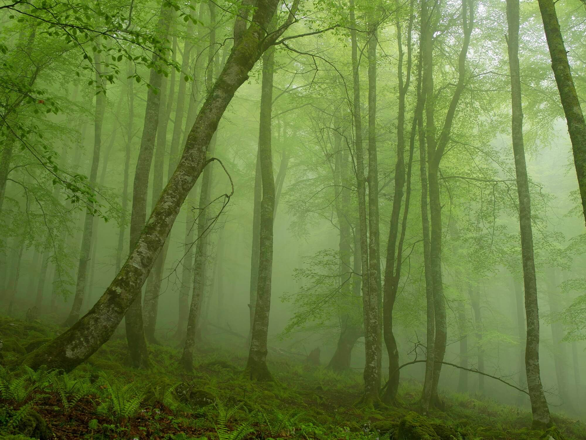foggy-mystic-forest