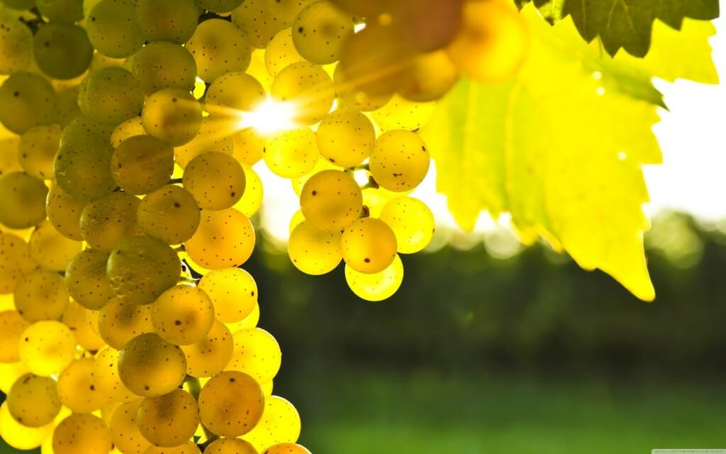 grape-tree-photos-wallpaper